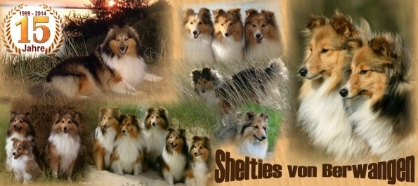 Shelties vom Berwangen