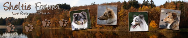 Sheltieforum